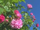 Jolie fleurs...