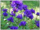 Jolies fleurs inconnues