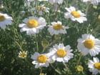 Jolies fleurs  sur la côte