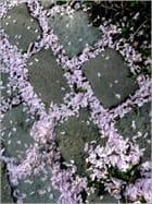 Jonchée de pétales sur les pavés