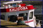 Kalicoba