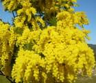 L'abeille et le nectar doré