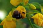 L'abeille & la fourmi