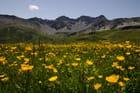 L'alpage en été dans la vallée d'Arosa en Suisse