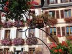 L'Alsace fleurie