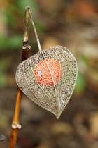 Voilà pourquoi on l'appelle L'amour en cage