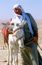 L'âne et son maître