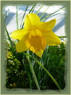 L'annonce que le printemps arrive ...
