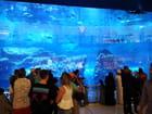 l'aquarium de Dubaï