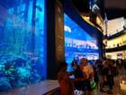 l'aquarium de Dubaî