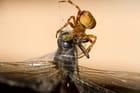 L'araignée et la libellule