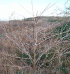 L'arbre à escargots