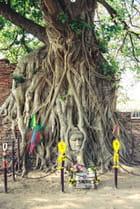 L'arbre de la Sagesse