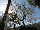 L'arbre de paix d'Arequipa