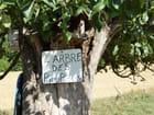 L'arbre des Pious Pious