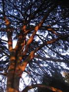 L'arbre du Parc de la Tête d'Or