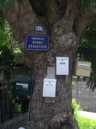 L'arbre indicateur