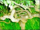 L'arbre noué