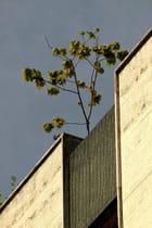 L'arbre sur le toit