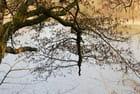 L'arbre tombé ..