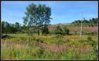 l'Ardenne en fleurs 1