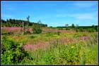 l'Ardenne en fleurs 2