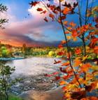 L`automne a Brompton