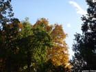 L'automne à l'arboretum...
