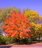 L'automne au Minnesota