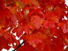 L'automne dans L'Aube