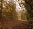 l'automne donne de jolies couleurs