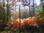 Un matin d'automne en forêt