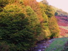 L'automne, en montagne.