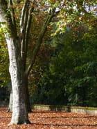 L'automne est partout