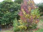 L'automne et le pottok