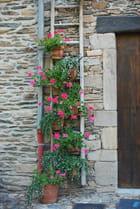 L'échelle fleurie