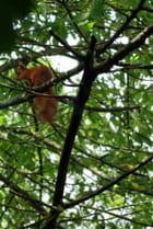 L'écureuil-4