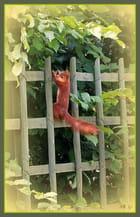 L'écureuil agile