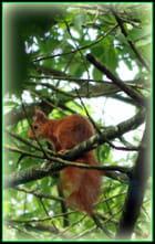 L'écureuil dans l'arbre