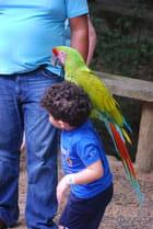 l'enfant et le perroquet