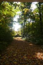 L'érablière à l'automne