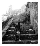 l' escalier