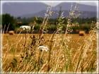 L'herbe tendre du marquis de Sade...MM