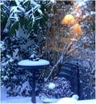 L'hiver à ma fenêtre ...