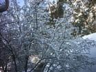 L'hiver en lituanie, kaunas