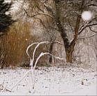 L'hiver en marche.....