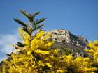 L'hiver en Provence