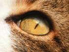 L'oeil du lynx...