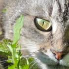 L'oeil vert tendre