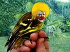 L'oiseau de mon jardin...
